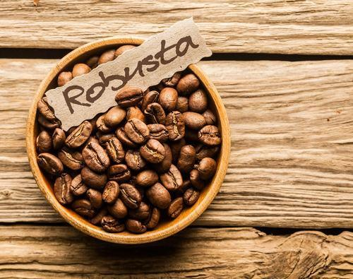 lak's coffee organic coffee cà phê sạch, cà phê nguyên chất Robusta coffee, nhân vật phản diện trong câu chuyện về lịch sử cà phê thế giới.
