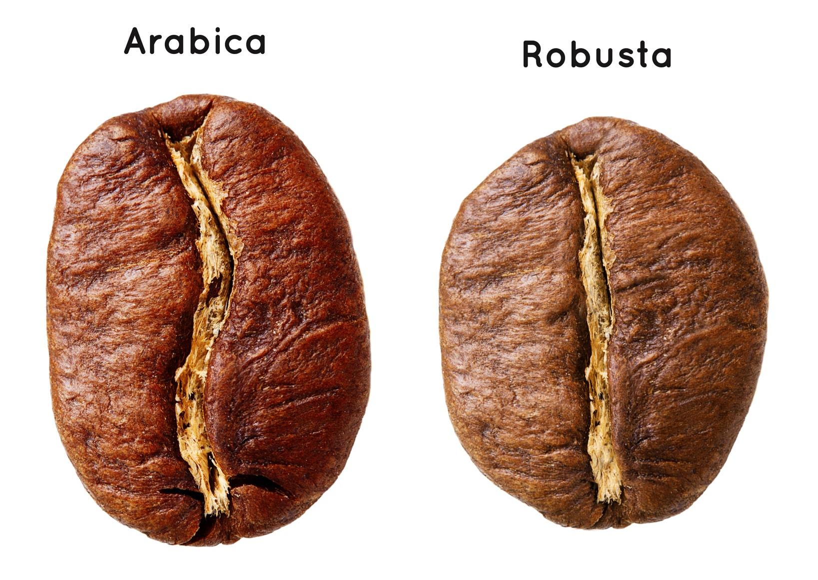lak's coffee organic coffee cà phê sạch, cà phê nguyên chất Phân biệt cafe arabica và robusta